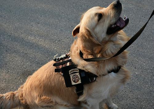 Taktyczne Szelki dla psa