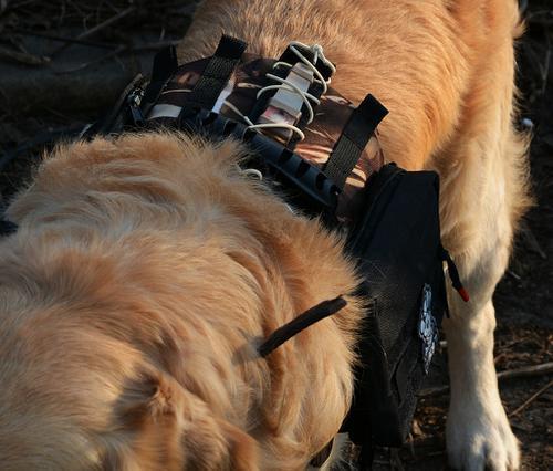 Kamizelka taktyczna dla psa